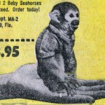 monkey-ad-detail